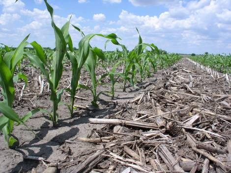 (note where corn is growing there is no residue)