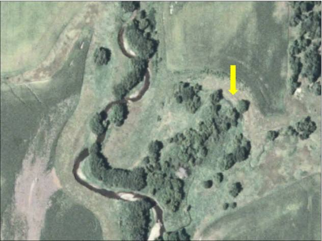 The same oxbow restoration site prior to restoration.  Site is not longer connected to creek and has completely filled in with sediment over the years.